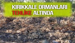 KIRIKKALE ORMANLARI TEHLİKE ALTINDA